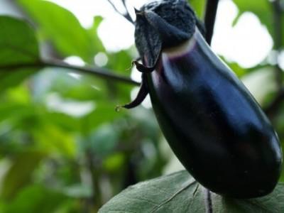 夏休みの自由研究はこれで決まり!植物の観察記録アプリ【 Life – Smart ガーデニング 日誌 】