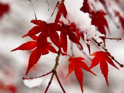 秋かと思っていたら…